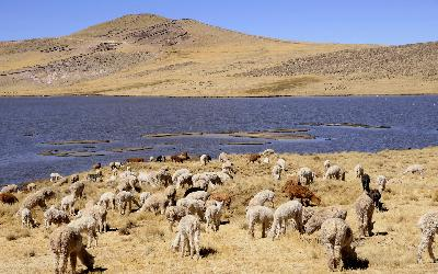 Peru | Altiplano