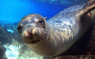 10-Classic-Galapagos-The-Natural-Habitat-Experience