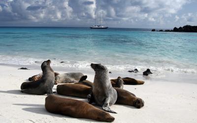 sea-lion-galapagos-island