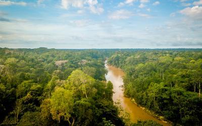 Amazonie 2