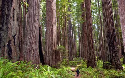 USA   Redwood NP