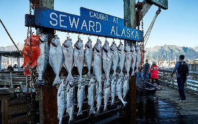 USA | Alaska_losos