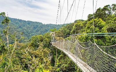 Rwanda | Nyungwe National Park_Canopy walk