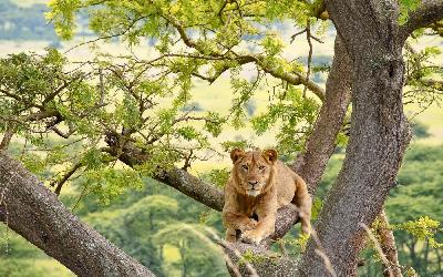 Uganda | Queen Elizabeth National Park