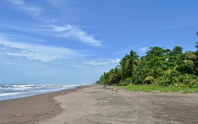 Kostarika | Playa de Tortuguero