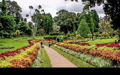 Srí Lanka | Kandy_Perideny Gardens