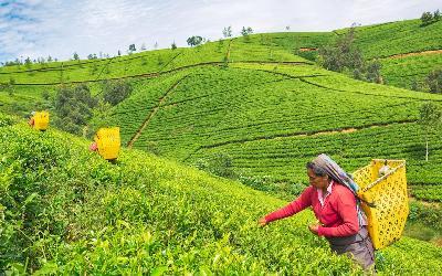 Srí Lanka | Nuwara Eliya