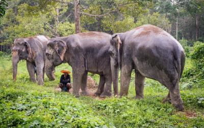Thajsko | Phuket_Elephant Sanctuaries