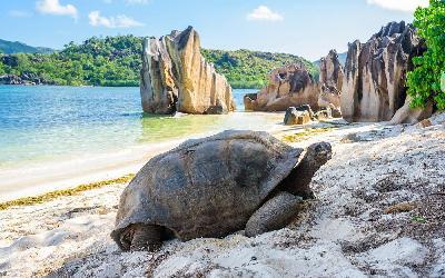 Seychely   Curieuse Island