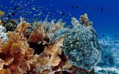 Seychely   Snorkeling Turtle