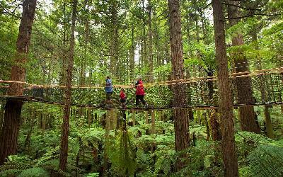 Nový Zéland | Whakarewarewa_Redwood Forest
