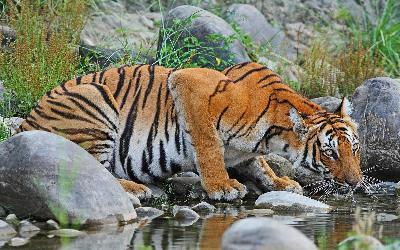 Nepál | Chitwan National Park