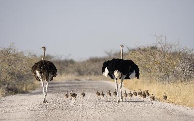 Namíbia   Etosha NP