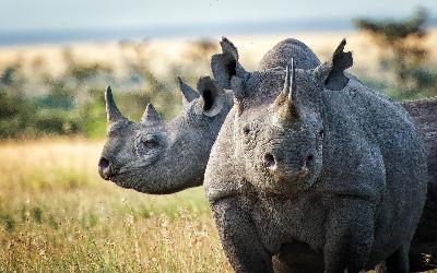 JAR | Kruger National Park