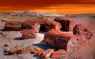 USA | Petrified Forest NP