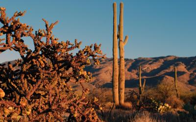 USA   Saguaro NP