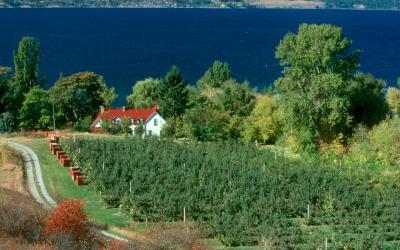 vinice poblíž Niagara Falls