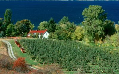 Kanada   vinice poblíž Niagara Falls