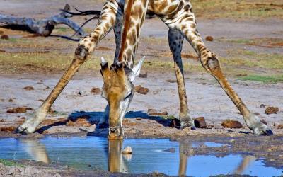 JAR | Kruger NP
