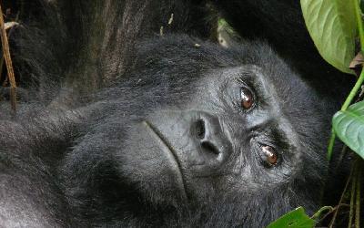 NP Bwindi