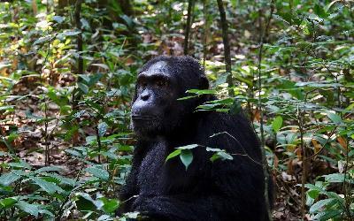 primate-3177179_1920 (2)