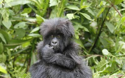 uganda-safari-tours-5838354_1920