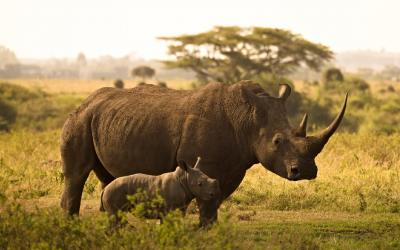 Lake Nakuru, nosorožec | Keňa