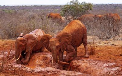 Tsavo NP, sloni | Keňa