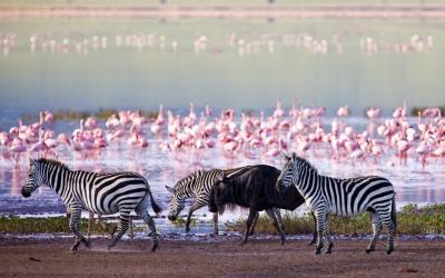 Lake Nakuru | Keňa