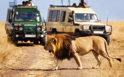 safari je dřina | Keňa