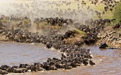 Masai Mara, velá migrace | Keňa