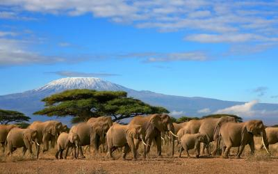Tsavo NP, v pozadí Kilimandžáro  | Keňa