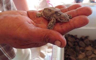 Saona želví záchraná stanice