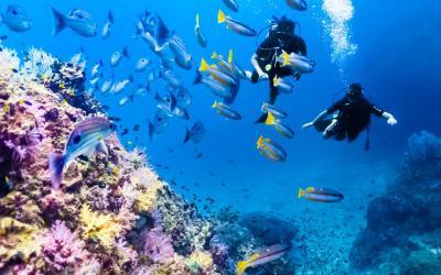Phi Phi potápění