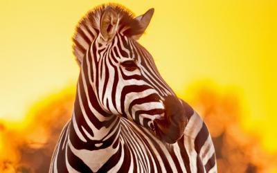 Safari...   Kruger NP