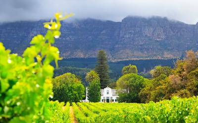 Krajina v údolí Constantia   Cape Town